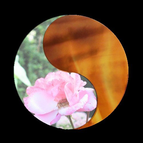 Flame And Flower 1 By Meyrocu