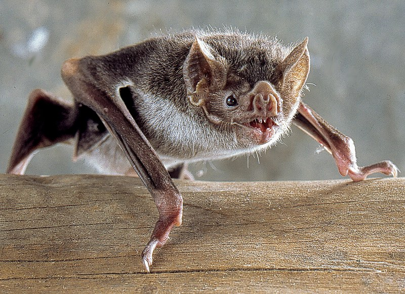Bat.jpg.7e0c64c3563cadeaa2da9cf4ea5e5d06.jpg