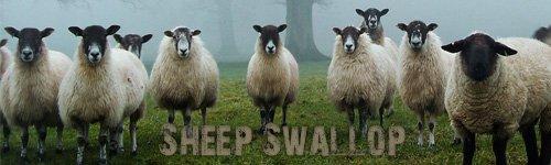 SheepSwallop.jpg